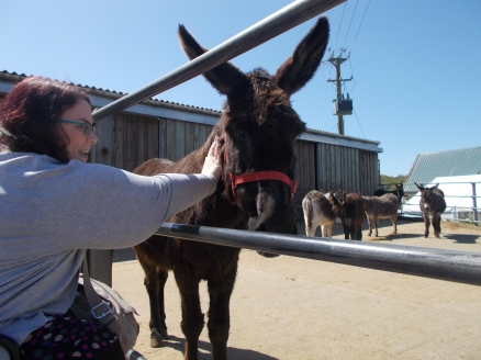 Cute dark donkey outside behind metal fence. Other donkeys in background. I'm in a cardigan, and am smiling and petting the donkey.